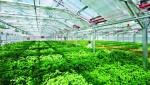 Góp ý Đề án thành lập khu nông nghiệp ứng dụng công nghệ cao Thái Nguyên