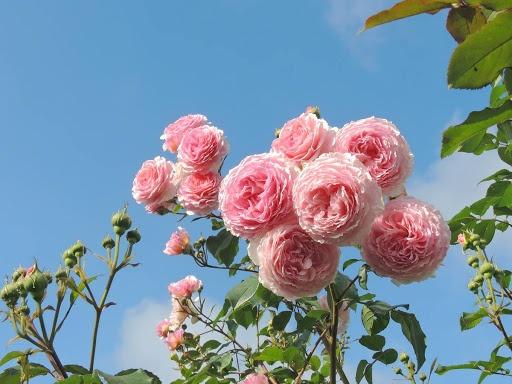 nhung loai hoa dep thich hop trong vao mua xuan
