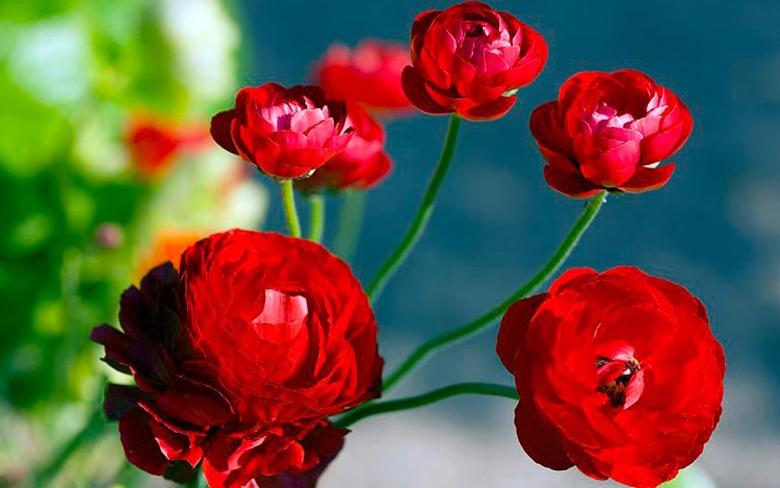 Các loại hoa đẹp trồng vào mùa Xuân