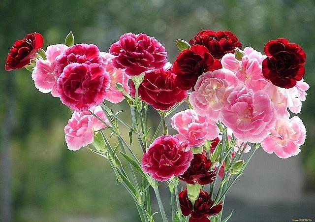 cac loai hoa dep trong vao mua xuan