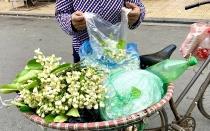 ha noi nguoi dan chon mua hoa buoi dip ram thang gieng