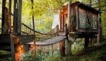 Choáng với căn nhà nằm trên cây 150 tuổi