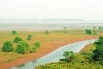 Cho thuê đất bãi bồi ven sông, ven biển tối đa 50 năm