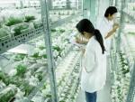 Gần 300 tỷ đồng xây Khu Nông nghiệp công nghệ cao