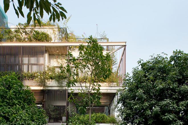 Ngôi nhà 3 tầng giấu mình trong tán cây ở Hà Nội