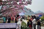 Lễ hội Hoa Anh Đào - Mai vàng Yên Tử 2018: Hợp tác và phát triển - Điểm đến của thành công