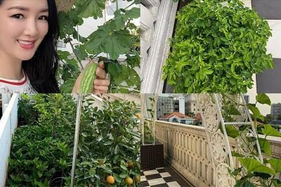 Vườn rau trong biệt thự triệu đô của Giáng My - bạn diễn 1 thời của Lý Hùng