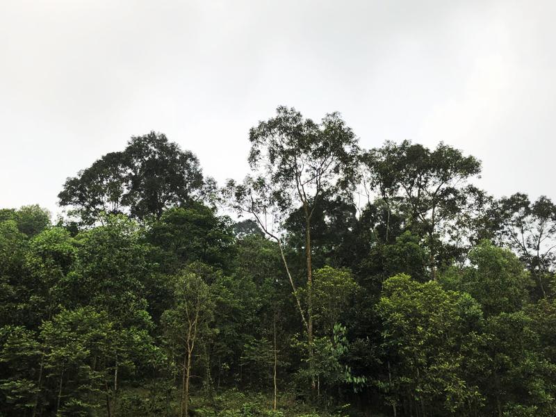Phú Thọ: Cần xử lý dứt điểm vụ tranh chấp đất đai tại xã Hương Xạ, huyện Hạ Hòa