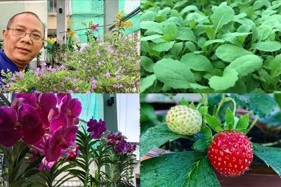 Thăm khu vườn hàng chục loại hoa và rau sạch của nghệ sĩ gạo cội Trung Dân