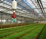 Quy hoạch tổng thể vùng nông nghiệp ứng dụng công nghệ cao
