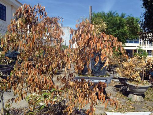 Kết quả hình ảnh cho cây khô héo