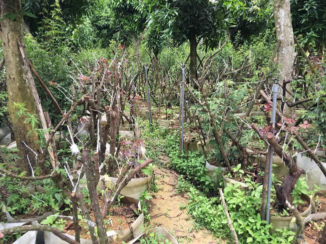 Bí ẩn 'thung lũng' 3 000 gốc hoa hồng ở Hà Nội | Văn hóa