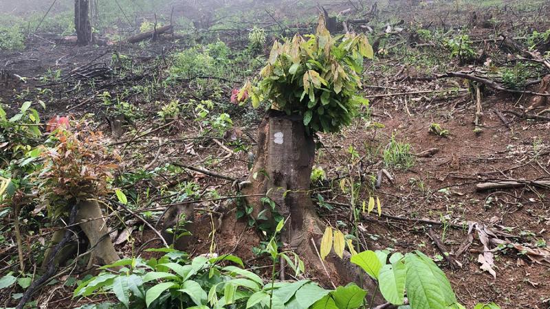 Nghệ An: Xử phạt 40 triệu đồng đối với đơn vị phá rừng phòng hộ