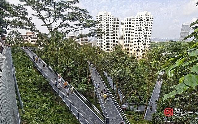 singapore lam nha trong rung nguoi dan ra duong nhu vao cong vien