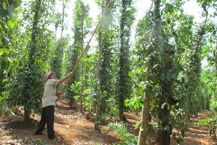 Thời hạn thuê đất công ích để sản xuất nông nghiệp