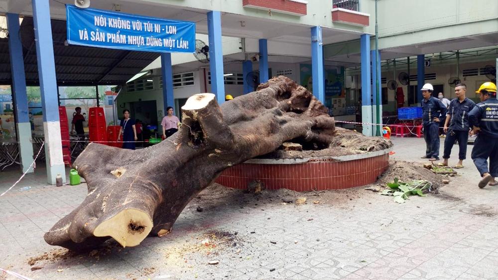 Công ty Công viên cây xanh không có hợp đồng chăm sóc cây tại Trường THCS Bạch Đằng