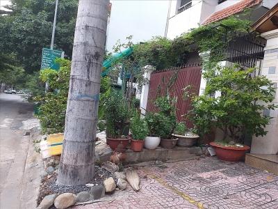 Có được chặt cây nhà hàng xóm sắp đổ sang nhà mình?