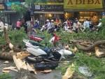 Cây phượng cổ thụ đổ ở phố trung tâm Hà Nội, 5 người bị thương