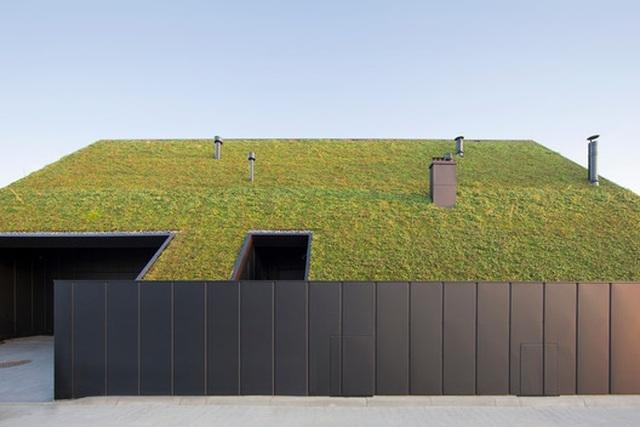 Chiêm ngưỡng nhà mái nghiêng phủ kín cây xanh nằm yên bình ở vùng ngoại ô