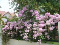 Những loại cây thích hợp trồng ở hướng Tây của ngôi nhà