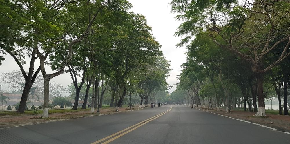 Thừa Thiên - Huế: Kiểm tra, xử lý cây xanh đô thị có nguy cơ gây mất an toàn