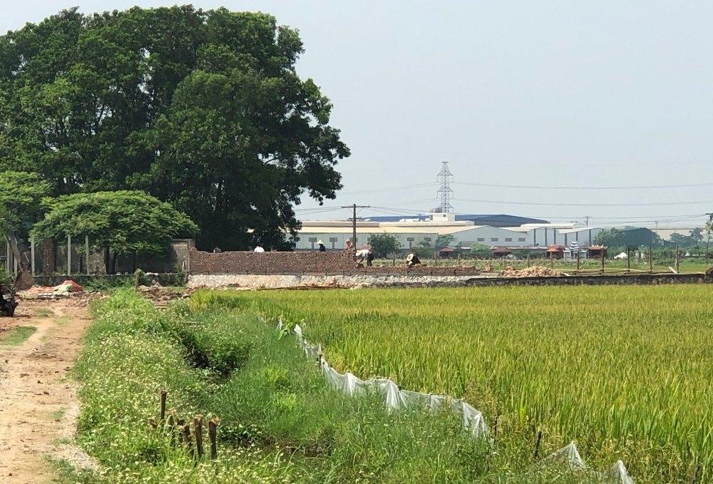 """Hà Nội: Chính quyền xã Kim Hoa quản lý yếu kém, hay """"làm ngơ"""" cho doanh nghiệp tự ý mua đất lúa để làm công nghiệp?"""