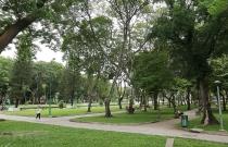 TP.HCM: Cây xanh đô thị và những tác động đến từ con người