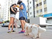 Quy định về cấm chăn, thả vật nuôi trong chung cư