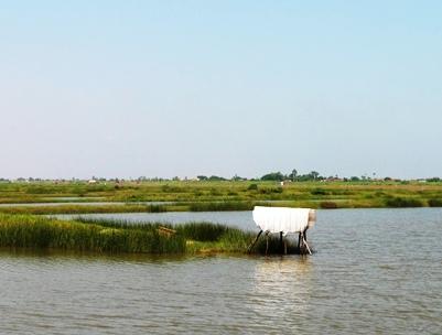 Bồi thường đối với vật nuôi là thủy sản khi thu hồi đất theo Luật  Đất đai năm 2013