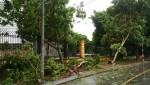 """Hà Nội: Hàng trăm cây xanh bị bão Mirinae """"hạ gục"""""""