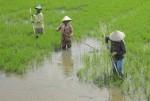Kiện toàn Ban Chỉ đạo Dự án cấp nước vùng Đồng bằng sông Cửu Long