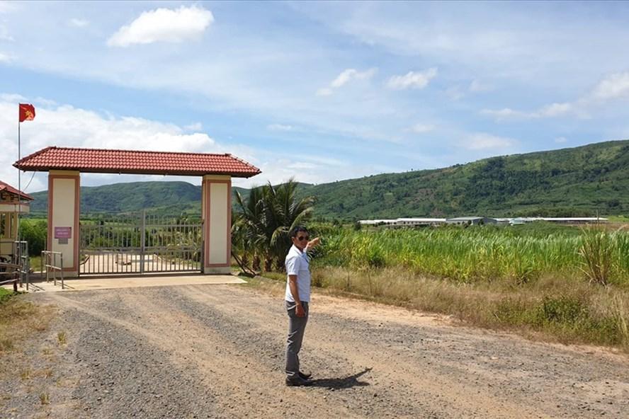"""Đắk Lắk: Đại dự án nuôi bò """"xí"""