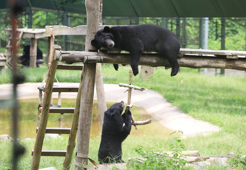 Ngôi nhà chung của gần 200 con gấu ở Việt Nam