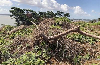 Quảng Ninh: Thu hồi hòn đảo 8ha vì san gạt đất rừng sai quy định