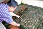 Nuôi lươn kiếm 300 triệu/tháng giữa Sài Gòn