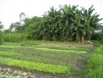Quy định về sử dụng đất nông nghiệp