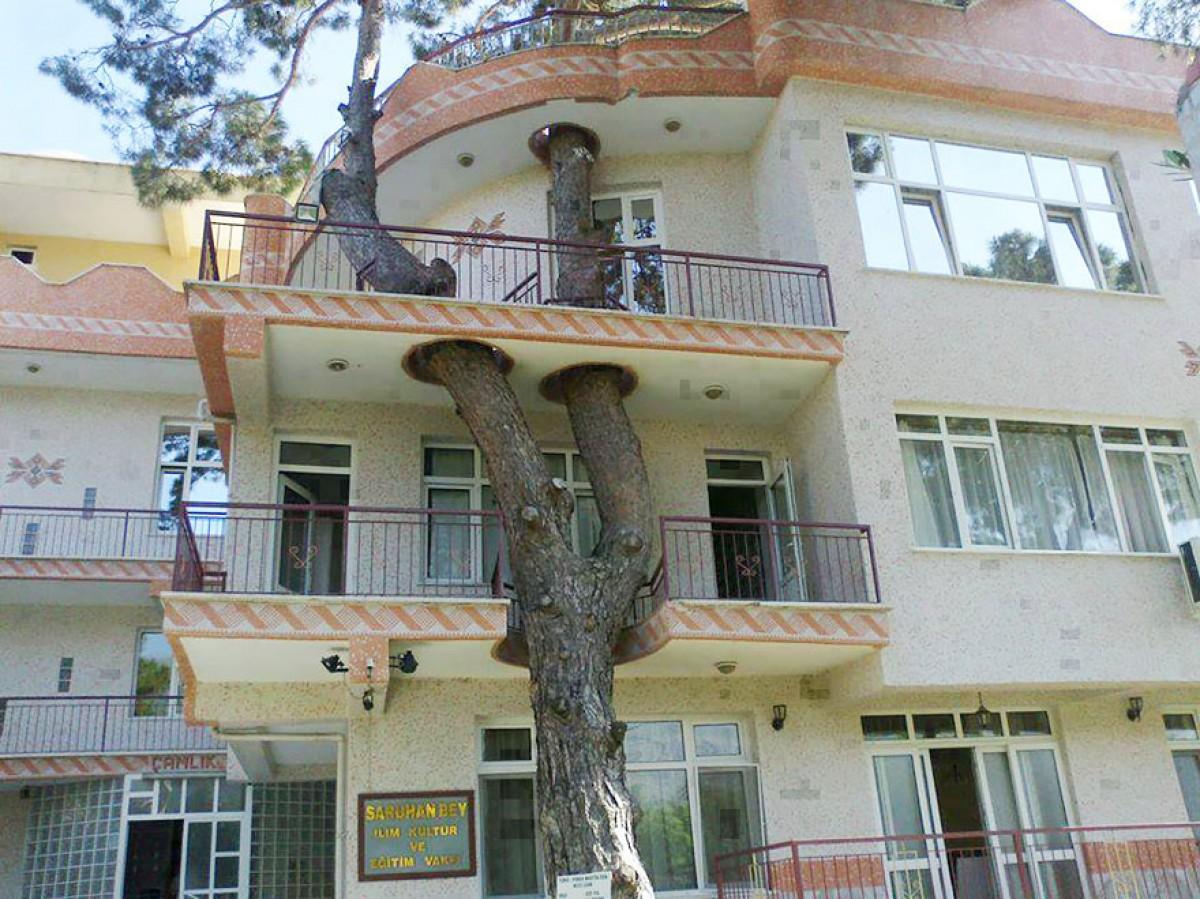 """235529baoxaydung image014 CÙng nhìn qua những thiết kế thông minh """"làm bạn"""" với cây xanh"""