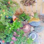 Vườn hoa đủ loại trong diện tích 2 m2 ở Sài Gòn