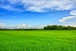 Điều chỉnh quy hoạch sử dụng đất tỉnh Sóc Trăng