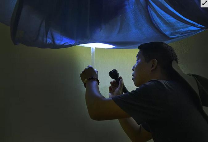 Người Hà Nội soi đèn bắt muỗi sốt xuất huyết