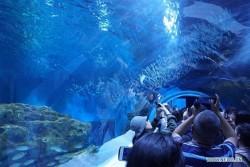 Công viên thủy cung cao nhất thế giới ở Trung Quốc mở cửa