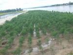 Quảng Trị: Hiệu quả từ việc phát triển trồng rừng ngập mặn