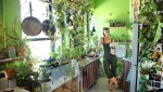 Cô gái trồng 670 cây trong nhà để lọc không khí