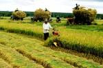 Hiệu quả tín dụng cho vay lĩnh vực nông nghiệp, nông thôn