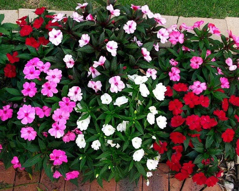 nhung loai hoa dep va de trong cho san vuon nha pho