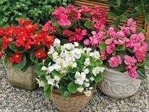 Những loài hoa đẹp và dễ trồng cho sân vườn nhà phố