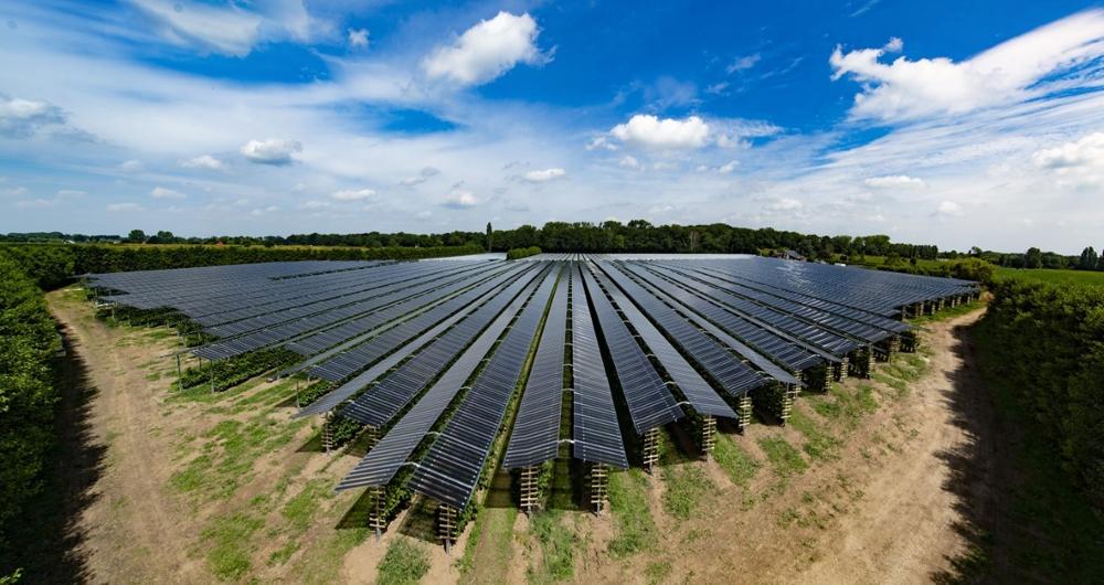 Công ty năng lượng Hà Lan phát triển pin mặt trời đặc biệt cho nông nghiệp