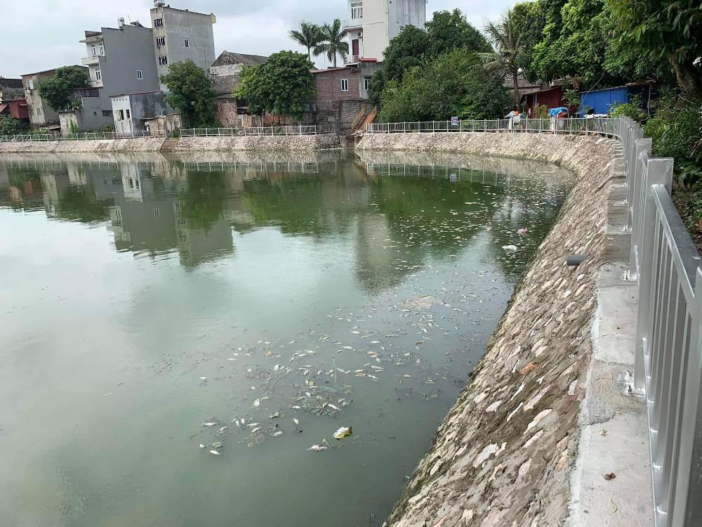 Bắc Giang: Cá chết trắng hồ, nghi do nước thải từ Công ty Cổ phần HaBaDa