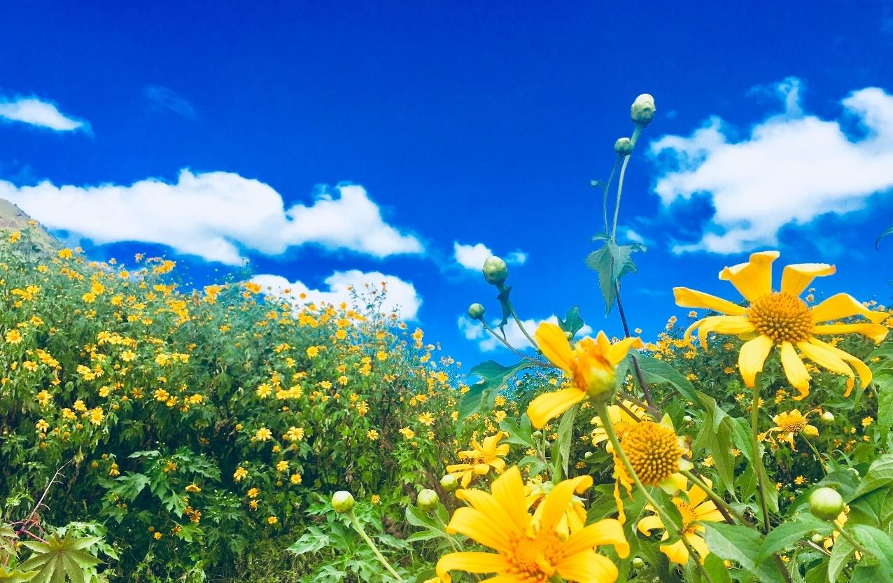 nhung loai hoa thich hop trong mua thu