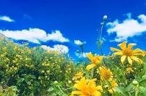 Những loại hoa thích hợp trồng mùa Thu